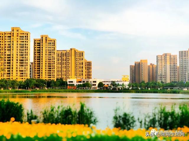 独家!太仙!上海这个1.8万平湖畔湿地花海已经绽放