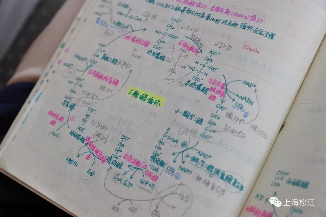"""松江""""00后""""学生手绘高颜值生物笔记本,画风实力圈粉!"""