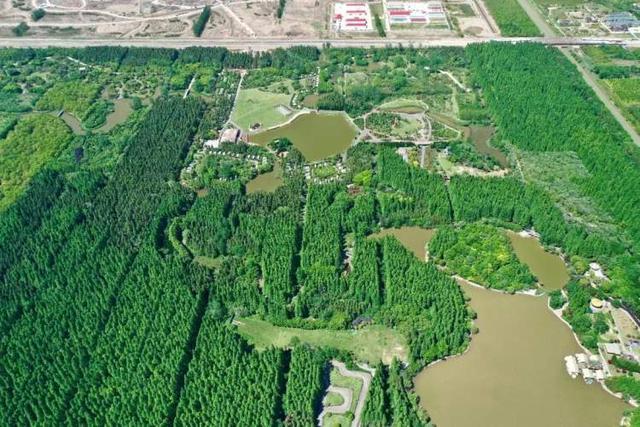 """美轮美奂!崇明东平国家森林公园改造提质即将大功告成,一波美图先向人们""""袭来"""""""