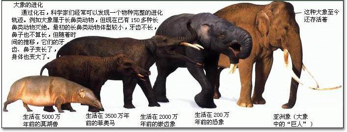 绘画还原大象家族演化史
