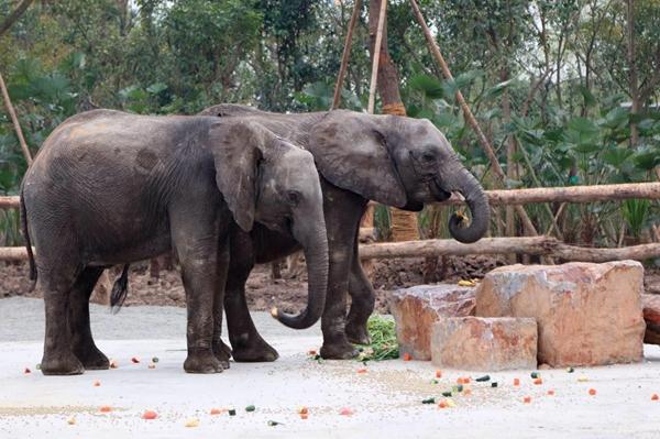 明起在野生动物园与游客见面