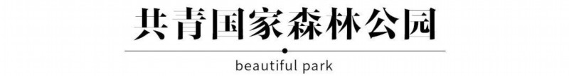 """上海10大""""INS同款""""花海,今夏必打卡"""