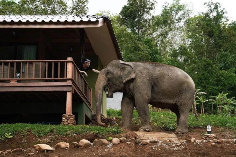 《【无极2平台代理】她从纽约搬到泰国丛林6年:原始生活能让人停止攀比,真正享受人生》