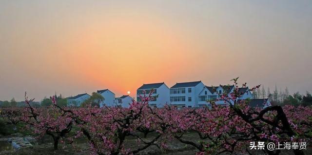 《【无极2娱乐代理注册】原来这个让小岳岳发出惊叹的村就在青村镇!》